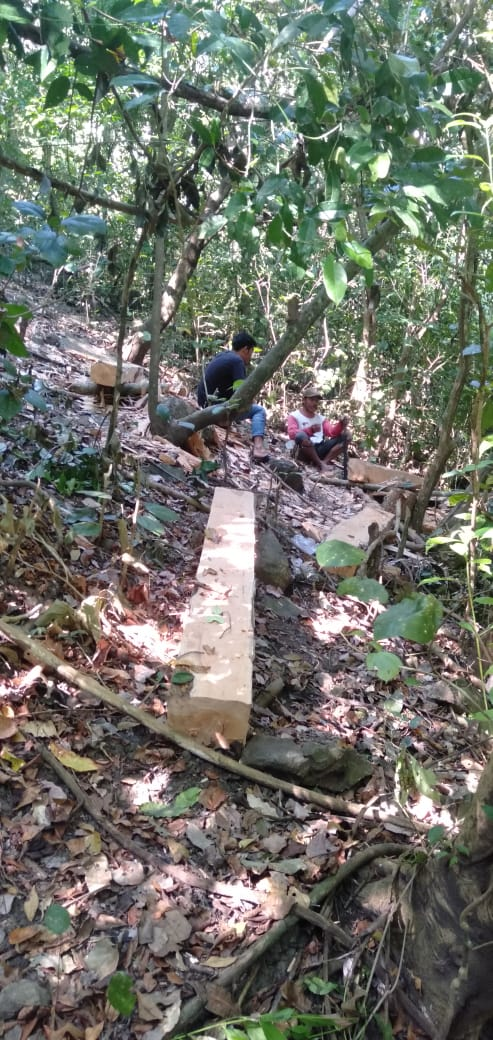 Hutan Kenali Lenangguar Digarap, Ancaman Longsor di Depan Mata